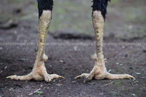 sisik kaki ayam super