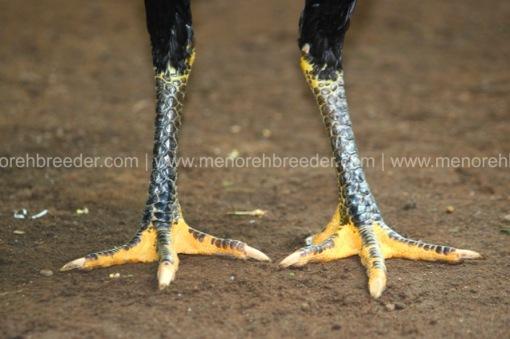 kaki ayam saigon