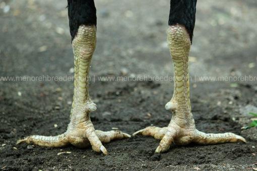 kaki mathai