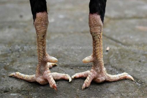 kaki-pukul-sakit