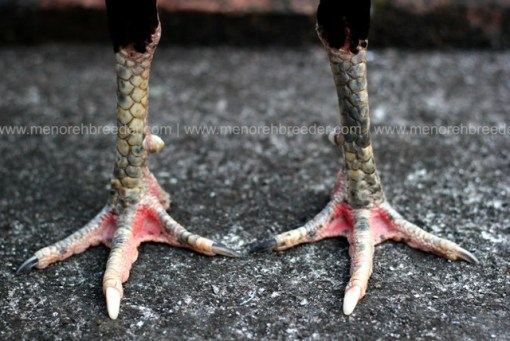 kaki-istimewa