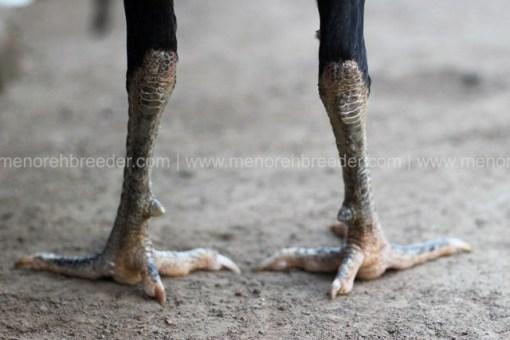 kaki-kering