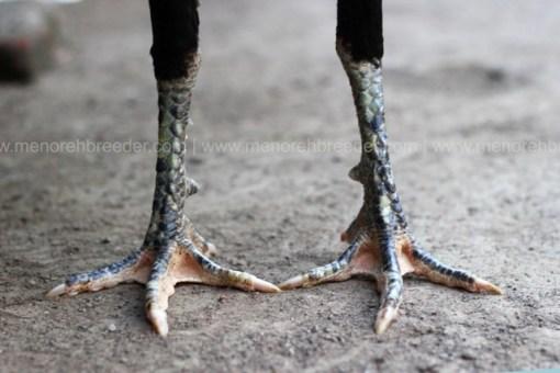 sisik-kaki-istimewa