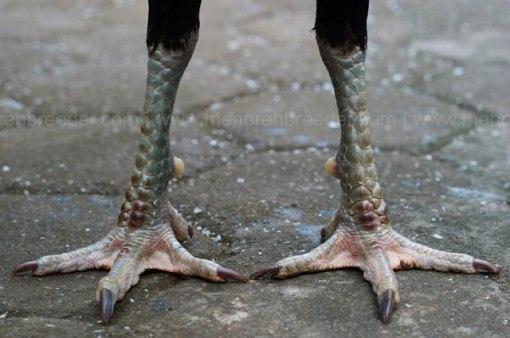 kaki-birma