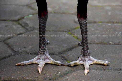 kaki-kering-ayam-aduan