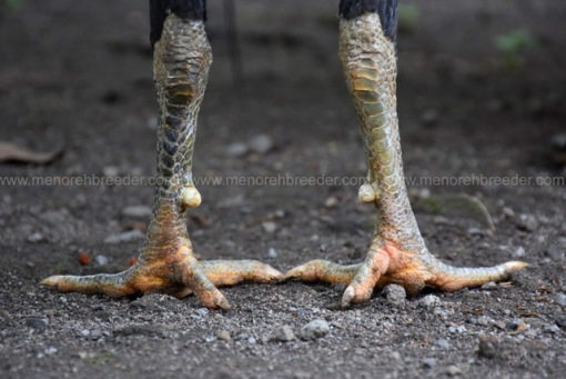 sisik-kaki-super